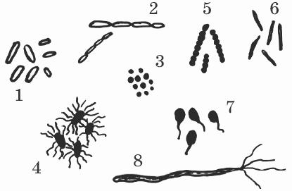 биология тканей и бактерий:
