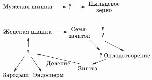 Дополните схему «Размножение