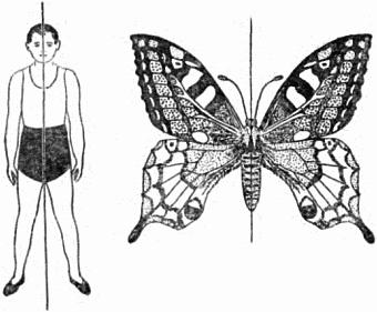 Картинки симметрия
