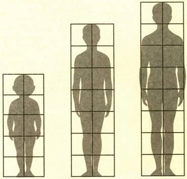 Схема соотношений пропорций