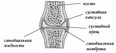 Суставная поверхность пилатес и суставы